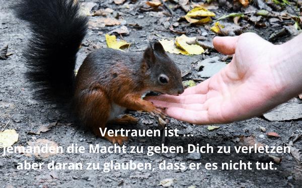 Vertrauen schaffen als Führungskraft - Ein Eichhörnchen nimmt vertrauensvoll aus der Hand eines Menschen Futter auf.